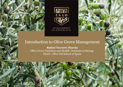 img-ebook-introduction-to-olive-grove-management